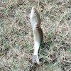 鱼获么么哒
