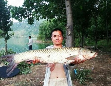 2017盤石頭水庫20斤大草來報道 自制餌料釣鱖魚