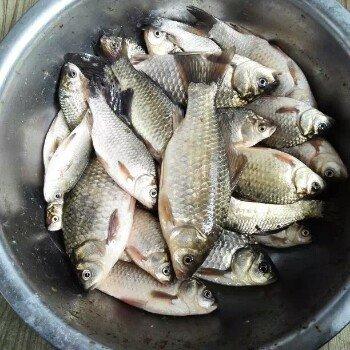 鱼真的是不好钓