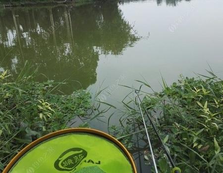 端午游龙舟水,解救龙神计划 钓鱼之家饵料钓罗非鱼