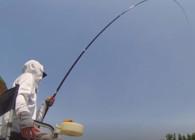 《麦子钓鱼》 野河 水库野钓鲤鱼秘方 钓上的一条条都是大家伙