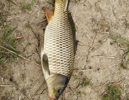 【传统钓野鲫⑤】真的,这环境也就是为了钓鱼才来!