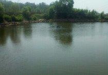 仙水钓鱼场