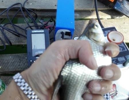 出筏朱溪水庫,累并快樂著! 蚯蚓餌料釣鳊魚