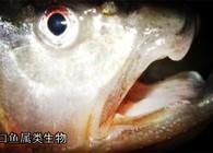 《探钓之旅》第二季 第六集 雄赳赳 来到鸭绿江
