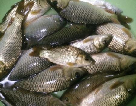 瘾太大,打雷下雨也阻挡不了解毒! 钓鱼之家饵料钓草鱼