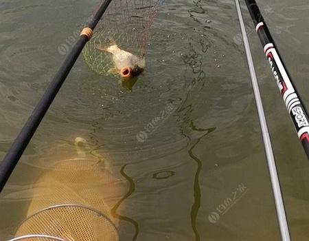 第一竿下去黑漂中公斤鲤