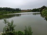 青山绿水钓渔场