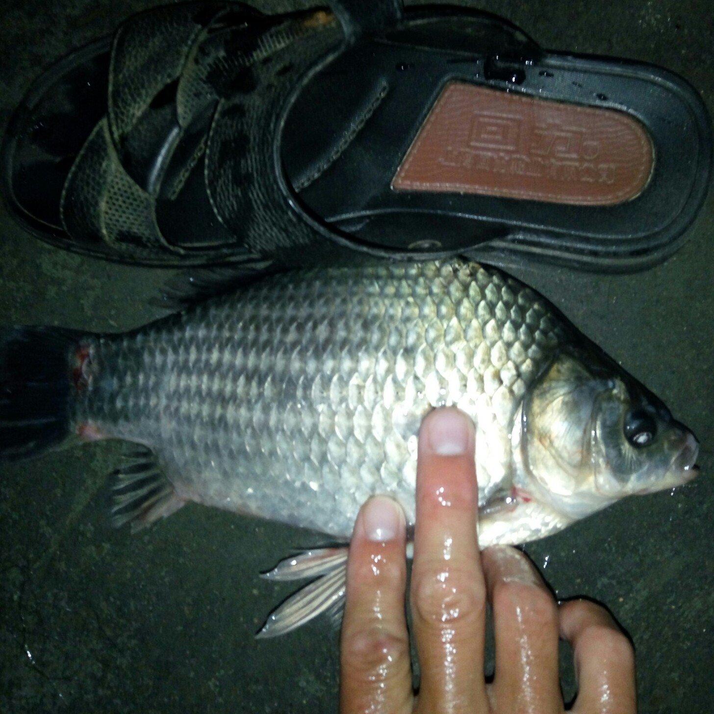 遇鱼域欲与渔娱