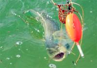 淺談夏季如何野釣