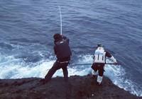 海钓装备饵料挑选方法?