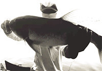 《钓鱼实战》第48期 应对水库鱼情变化钓草鱼