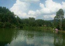 山塘钓鱼场