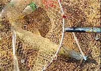 《垂钓对象鱼视频》 钓友坑塘钓获大草鱼