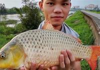 资深钓鱼人西江之行垂钓日记分享